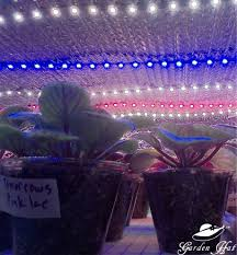 african violet grow light leds for african violets the journey begins gardenhat org