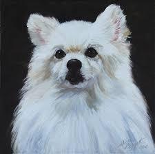 american eskimo dog michigan miniature american eskimo dog painting by alice leggett