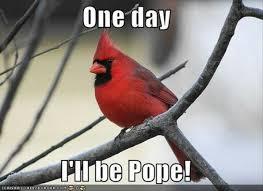 Meme Bird - the absolutely best bird memes ever