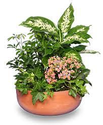 indoor plant arrangements garden planter green blooming plants all house plants