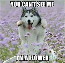 Wednesday Funny Meme - funny image 30 funny animal captions part 8 30 pics