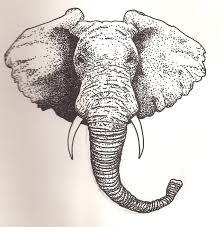 elephant head by scheinberg on deviantart