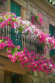 best 25 balcony flowers ideas on pinterest balcony small