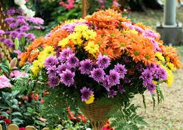 refresh containers with cool fall flowers and foliage garden club