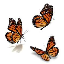 15 diy how to your backyard awesome ideas 5 butterfly moth