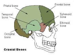 Floor Of The Cranium Cranial Bones Location Anatomy Functions Diagram And Diseases