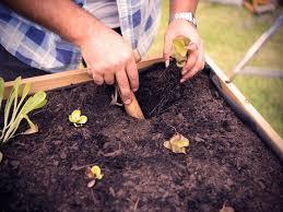vegetable garden sun requirements how to make a vegetable garden in your backyard