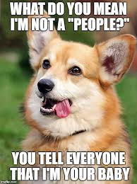 10 corgi memes that will make you laugh what every dog deserves