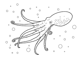 octopus coloring pages with starfish underwater coloringstar