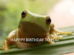funny frog singing happy birthday youtube frogs pinterest