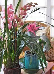 219 best indoor gardens images on pinterest bulbs garden