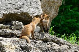 Galena Illinois Galena Galena Illinois Galena Is A Great Place To See Wildlife