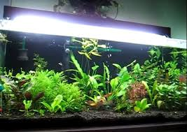 How To Aquascape A Planted Tank Aquarium Substrate Choices For Planted And Non Planted Aquariums