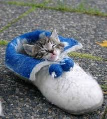 Cute Kitty Meme - snug as a bug in a rug except it s a kitty asleep in a shoe