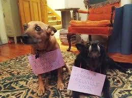 Dog Shaming Meme - herman melville dogshaming know your meme