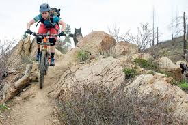 skiing with australian shepherd 10 tips how to train a trail dog pinkbike