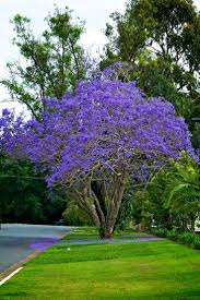 native plants of south america 113 best flowers hawaiian images on pinterest tropical flowers