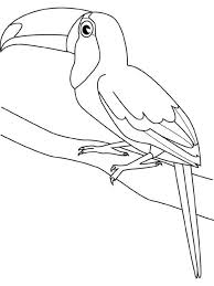 superb toucan animal coloring pages toucan bird coloring page for