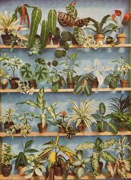 house plants going back in time