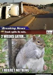 Squirrel Nuts Meme - funny squirrel meme