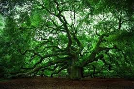 interesting facts about trees wander lord