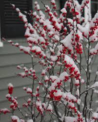 red house garden december 2013