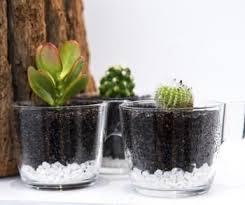 tea cup cacti terrarium u2013 haus of bloom