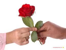 Flower Pictures Md Sahan Mdsahan10 Twitter