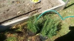 preparing raised garden bed for winter youtube
