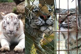 Indiana wildlife images Peta plans to sue indiana organization 39 wildlife in need 39 wbaa jpg
