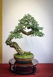 pot bonsai design 39 best bankan images on pinterest bonsai trees ikebana and plants