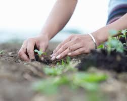 How To Start A Business Email Conversation by The Pros And Cons Of Starting A Gardening Business