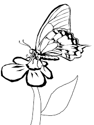 imagine butterflies coloring pages coloring pages print free