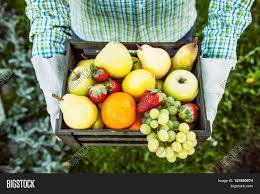 fresh fruit farmer with bowl of fruit s fruit basket stock