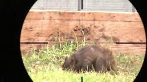 marauder backyard pest control 8 youtube