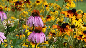 24 best native iowa plants images on pinterest native plants all perennial wildflower seed mix american meadows