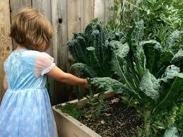 blog u2014 portland edible gardens raised garden beds edible