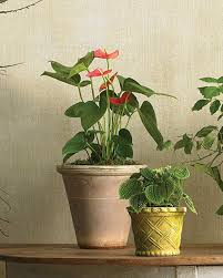 houseplants for any kind of light martha stewart