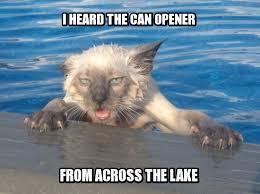 Cat Meme Maker - sorry cat meme generator best cat wallpaper 2018