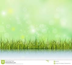 light green color green grass with reflection on water floor bokeh effect on light
