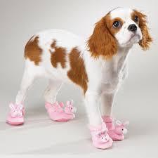 booties for dogs hardwood floors wood floors