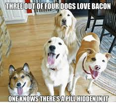 Dog Bacon Meme - three out of four dogs love bacon one knows theresa pill