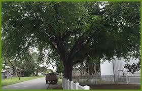 phillips tree care tree service chickasha ok