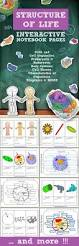 best 25 plant cell physiology ideas on pinterest plant cell