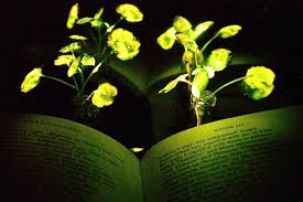 glowing plants may one day replace electric lights