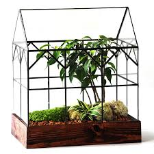 the hall house terrarium