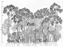 ecology and society domestic forests a new paradigm for