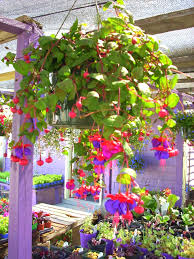 hanging flower baskets followfirefish
