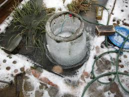 how to winterize pond gardens protecting water gardens over