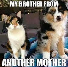 Funny Cat And Dog Memes - dogsmemes catsmemes funny animal pictures cat memes dogs memes